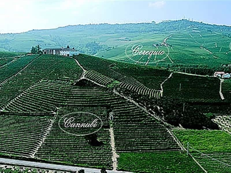 Vigneti - Vineyards